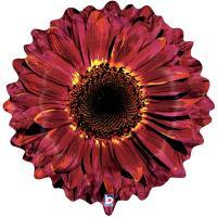 Шар фигура фольга Цветок Гербера бордовая